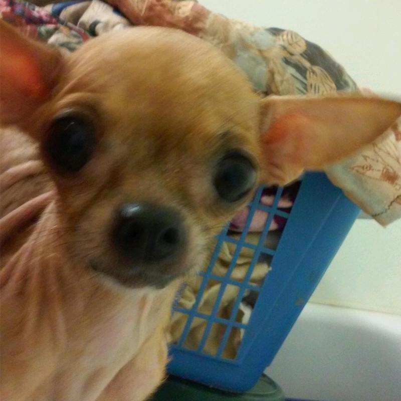 Chibi, found in Fower Bluff